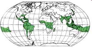 Bambus, Weltwissen, Guadua, Weltkarte, Bambuswald, natürliche Waldform